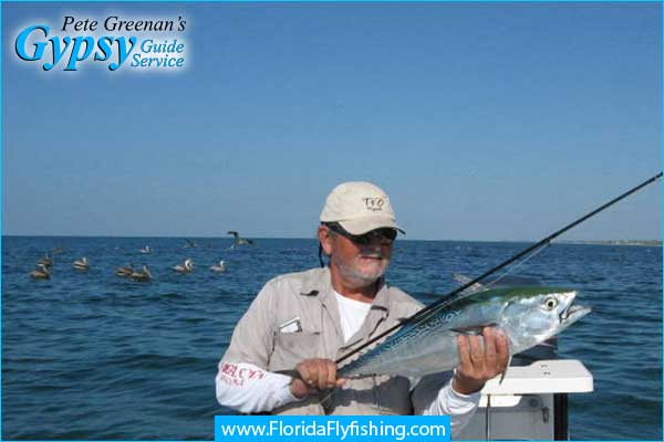 Bonito caught while fly fishing in Boca Grande, FL