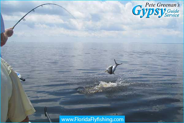 Jumping tarpon hooked on fly rod in Boca Grande, FL